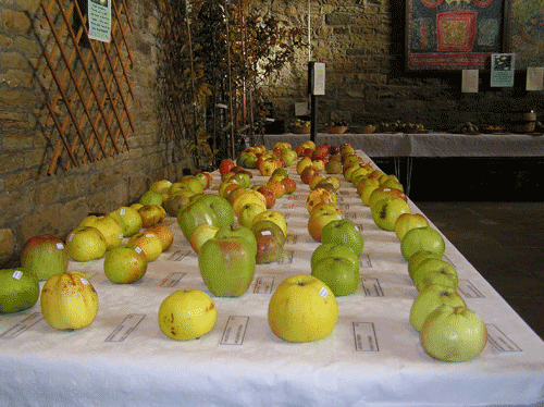 Oakwell Hall apples