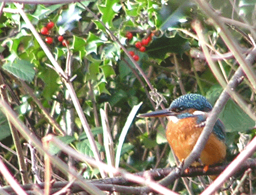 Oakwell Hall nature trail with a kingfisher bird